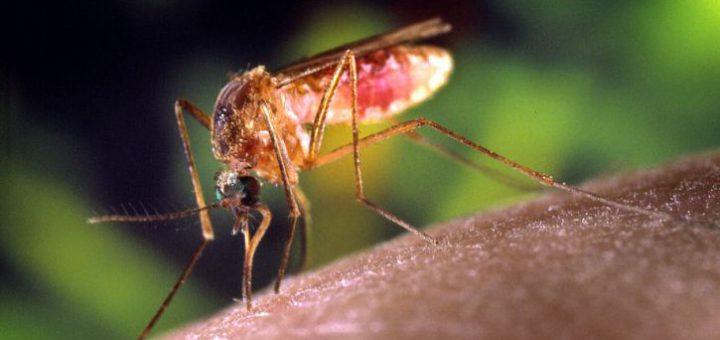 Hat die Mücke zugestochen, hilft als Sofortmaßnahme kühlen und auf die Einstichstelle spucken. Foto: pixnio