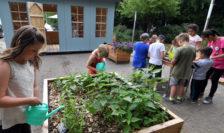 In den Hochbeeten wurden zum Beispiel Färberkrapp, Brennnessel, Ringelblume und Tagetes angepflanzt. Foto: Konczak
