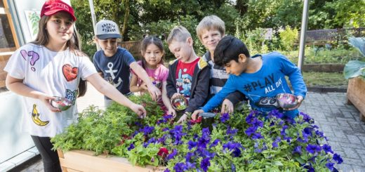 Die Workshopteilnehmer von der Parkschule ernteten die Zutaten für ihre Farbstoffe im Hof der Städtischen Galerie direkt aus den Hochbeeten des Färbergartens.Foto: Meyer