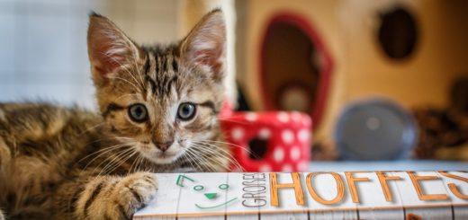 Katzenkind Tammo lädt im Namen aller Tiere zum großen Hoffest auf den Tierschutzhof Delmenhorst ein. Foto: TSV