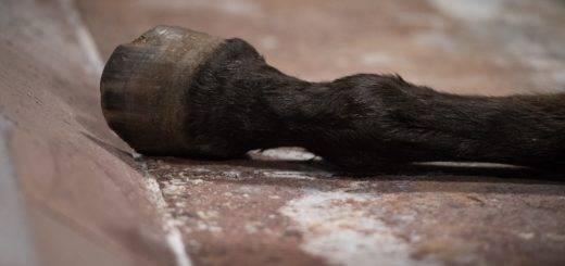 Tote Pferde sollen Ende nächsten Jahres in Blender verbrannt werden.Fotos: pv