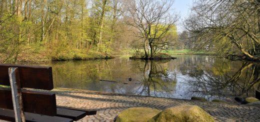 Bei der geplanten Umgestaltung der Grünflächen im Wollepark, wie zum Beispiel rund um den Teich, sollen Teilweise Pläne aus dem 19. Jahrhundert umgesetzt werden.Foto: Konczak