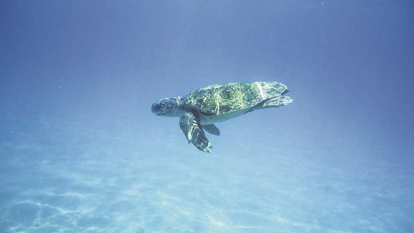 Wasserschildkröte zu Besuch Foto: pixabay.com