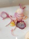Die Zwiebeln waren sehr üppig geschnitten. Foto: pv
