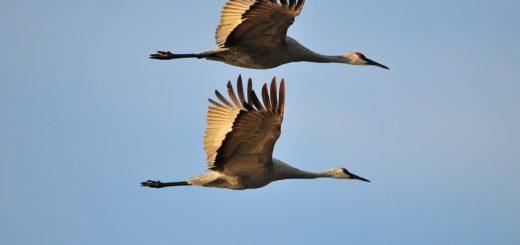 In den Herbstferien zum Vogelbeobachter werden. Foto: pixabay.comie sic