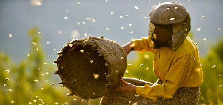 Land de Honigs ist unser Film der Woche. Foto: Neue Vision