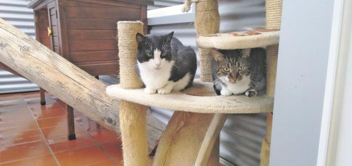 """Fred und Ginger leben seit ihrer Geburt am 18. Juli 2010 im """"Dorf der Tiere"""".Foto: pv"""