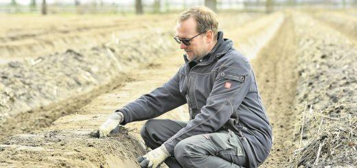 Eigentlich müsste Hajo Kaemena bald die ersten Erntehelfer aus Polen einbestellen. Foto: Schlie