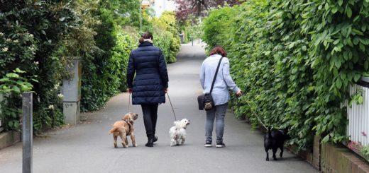 Auch im Helene-Kaisen-Weg lagen schon Köder aus, die mit Klingen gespickt waren. Der Weg ist eine beliebte Gassistrecke. Foto: Holz