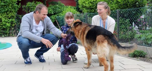 Heiko, Carlotta und Kirsten Zeller (v. l.) haben dem 14-jährigen Schäferhund Berny als Pflegefamilie ein neues Zuhause gegeben. Den Großteil der Kosten trägt der Tierscutz. Foto: Holz