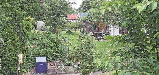 Blick in ein Kleingartengebiet