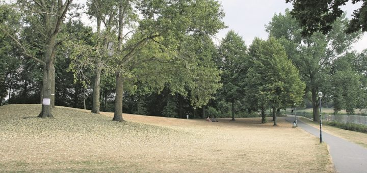 Bereits im Sommer lassen die Pappeln am Werdersee die Blätter fallen. Es ist ein Schutzmechanismus. Foto: Holz