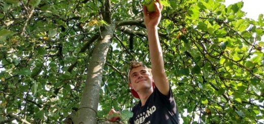 Kleingärtner haben häufig mehr Obst und Gemüse, als sie selber verarbeiten können. Foodsaver wie Alexander Schröder helfen bei der Ernte und nehmen ihnen Übriggebliebenes ab.Foto: pv