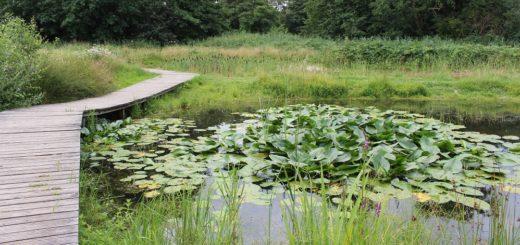 Der Park links der Weser besticht mit seiner Naturbelassenheit. Unterschiedliche Ökosysteme konnten entstehen und bieten auch geschützten Arten heute einen Lebensraum. Fotos: Füller